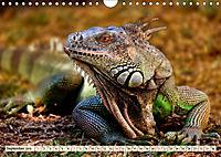 Wunderschöner Leguan (Wandkalender 2019 DIN A4 quer) - Produktdetailbild 9