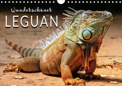 Wunderschöner Leguan (Wandkalender 2019 DIN A4 quer), Peter Roder