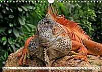 Wunderschöner Leguan (Wandkalender 2019 DIN A4 quer) - Produktdetailbild 4