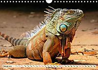 Wunderschöner Leguan (Wandkalender 2019 DIN A4 quer) - Produktdetailbild 2