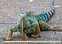 Wunderschöner Leguan (Wandkalender 2019 DIN A4 quer) - Produktdetailbild 7