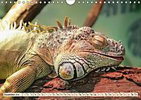 Wunderschöner Leguan (Wandkalender 2019 DIN A4 quer) - Produktdetailbild 12