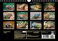 Wunderschöner Leguan (Wandkalender 2019 DIN A4 quer) - Produktdetailbild 13