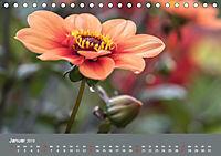 Wundervolle Blütenpracht - Fotowalk im Dahliengarten (Tischkalender 2019 DIN A5 quer) - Produktdetailbild 1