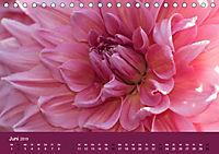 Wundervolle Blütenpracht - Fotowalk im Dahliengarten (Tischkalender 2019 DIN A5 quer) - Produktdetailbild 6