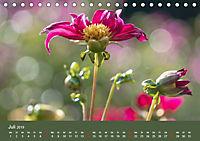 Wundervolle Blütenpracht - Fotowalk im Dahliengarten (Tischkalender 2019 DIN A5 quer) - Produktdetailbild 7