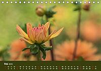 Wundervolle Blütenpracht - Fotowalk im Dahliengarten (Tischkalender 2019 DIN A5 quer) - Produktdetailbild 5