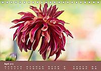 Wundervolle Blütenpracht - Fotowalk im Dahliengarten (Tischkalender 2019 DIN A5 quer) - Produktdetailbild 4