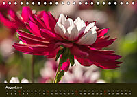 Wundervolle Blütenpracht - Fotowalk im Dahliengarten (Tischkalender 2019 DIN A5 quer) - Produktdetailbild 8