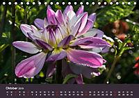 Wundervolle Blütenpracht - Fotowalk im Dahliengarten (Tischkalender 2019 DIN A5 quer) - Produktdetailbild 10