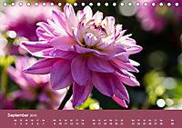Wundervolle Blütenpracht - Fotowalk im Dahliengarten (Tischkalender 2019 DIN A5 quer) - Produktdetailbild 9