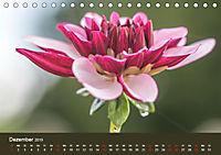 Wundervolle Blütenpracht - Fotowalk im Dahliengarten (Tischkalender 2019 DIN A5 quer) - Produktdetailbild 12