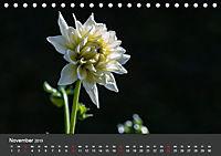 Wundervolle Blütenpracht - Fotowalk im Dahliengarten (Tischkalender 2019 DIN A5 quer) - Produktdetailbild 11