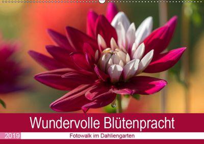 Wundervolle Blütenpracht - Fotowalk im Dahliengarten (Wandkalender 2019 DIN A2 quer), André Teßen