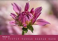 Wundervolle Blütenpracht - Fotowalk im Dahliengarten (Wandkalender 2019 DIN A2 quer) - Produktdetailbild 2