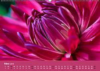 Wundervolle Blütenpracht - Fotowalk im Dahliengarten (Wandkalender 2019 DIN A2 quer) - Produktdetailbild 3