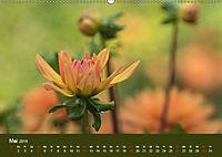 Wundervolle Blütenpracht - Fotowalk im Dahliengarten (Wandkalender 2019 DIN A2 quer) - Produktdetailbild 5