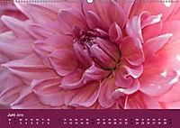 Wundervolle Blütenpracht - Fotowalk im Dahliengarten (Wandkalender 2019 DIN A2 quer) - Produktdetailbild 6