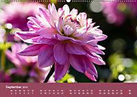 Wundervolle Blütenpracht - Fotowalk im Dahliengarten (Wandkalender 2019 DIN A2 quer) - Produktdetailbild 9