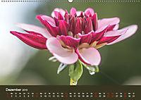 Wundervolle Blütenpracht - Fotowalk im Dahliengarten (Wandkalender 2019 DIN A2 quer) - Produktdetailbild 12