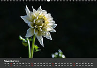 Wundervolle Blütenpracht - Fotowalk im Dahliengarten (Wandkalender 2019 DIN A2 quer) - Produktdetailbild 11