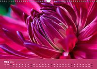 Wundervolle Blütenpracht - Fotowalk im Dahliengarten (Wandkalender 2019 DIN A3 quer) - Produktdetailbild 3