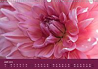 Wundervolle Blütenpracht - Fotowalk im Dahliengarten (Wandkalender 2019 DIN A3 quer) - Produktdetailbild 6