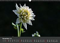 Wundervolle Blütenpracht - Fotowalk im Dahliengarten (Wandkalender 2019 DIN A3 quer) - Produktdetailbild 11