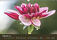Wundervolle Blütenpracht - Fotowalk im Dahliengarten (Wandkalender 2019 DIN A3 quer) - Produktdetailbild 12