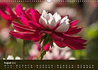 Wundervolle Blütenpracht - Fotowalk im Dahliengarten (Wandkalender 2019 DIN A3 quer) - Produktdetailbild 8