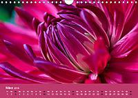 Wundervolle Blütenpracht - Fotowalk im Dahliengarten (Wandkalender 2019 DIN A4 quer) - Produktdetailbild 3