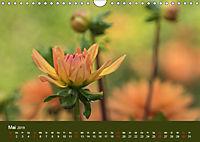 Wundervolle Blütenpracht - Fotowalk im Dahliengarten (Wandkalender 2019 DIN A4 quer) - Produktdetailbild 5