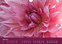 Wundervolle Blütenpracht - Fotowalk im Dahliengarten (Wandkalender 2019 DIN A4 quer) - Produktdetailbild 6