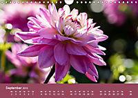 Wundervolle Blütenpracht - Fotowalk im Dahliengarten (Wandkalender 2019 DIN A4 quer) - Produktdetailbild 9