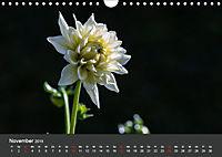 Wundervolle Blütenpracht - Fotowalk im Dahliengarten (Wandkalender 2019 DIN A4 quer) - Produktdetailbild 11