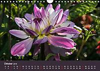 Wundervolle Blütenpracht - Fotowalk im Dahliengarten (Wandkalender 2019 DIN A4 quer) - Produktdetailbild 10