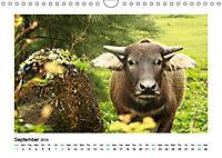 XIN CHÀO VIETNAM (Wall Calendar 2019 DIN A4 Landscape) - Produktdetailbild 9