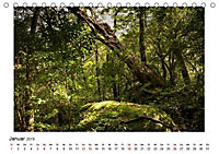 Yakushima - Japans Weltnaturerbe (Tischkalender 2019 DIN A5 quer) - Produktdetailbild 2
