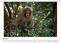 Yakushima - Japans Weltnaturerbe (Tischkalender 2019 DIN A5 quer) - Produktdetailbild 4