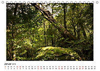 Yakushima - Japans Weltnaturerbe (Tischkalender 2019 DIN A5 quer) - Produktdetailbild 1