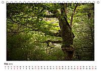 Yakushima - Japans Weltnaturerbe (Tischkalender 2019 DIN A5 quer) - Produktdetailbild 5