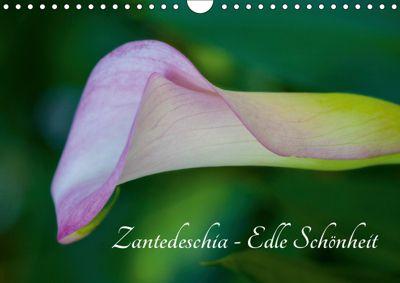 Zantedeschia - Edle Schönheit (Wandkalender 2019 DIN A4 quer), Silvia Drafz
