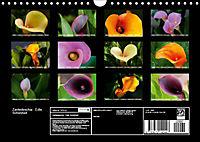 Zantedeschia - Edle Schönheit (Wandkalender 2019 DIN A4 quer) - Produktdetailbild 13