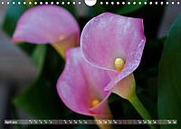 Zantedeschia - Edle Schönheit (Wandkalender 2019 DIN A4 quer) - Produktdetailbild 4