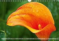 Zantedeschia - Edle Schönheit (Wandkalender 2019 DIN A4 quer) - Produktdetailbild 8