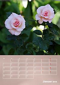 Zarte Schönheiten - Rosen (Wandkalender 2019 DIN A2 hoch) - Produktdetailbild 1