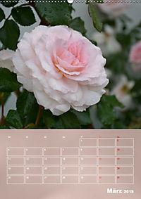 Zarte Schönheiten - Rosen (Wandkalender 2019 DIN A2 hoch) - Produktdetailbild 3