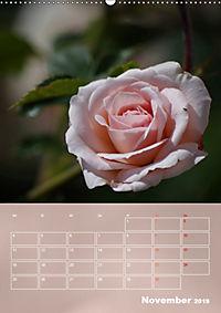 Zarte Schönheiten - Rosen (Wandkalender 2019 DIN A2 hoch) - Produktdetailbild 11