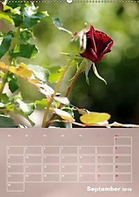 Zarte Schönheiten - Rosen (Wandkalender 2019 DIN A2 hoch) - Produktdetailbild 9
