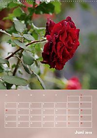 Zarte Schönheiten - Rosen (Wandkalender 2019 DIN A2 hoch) - Produktdetailbild 6